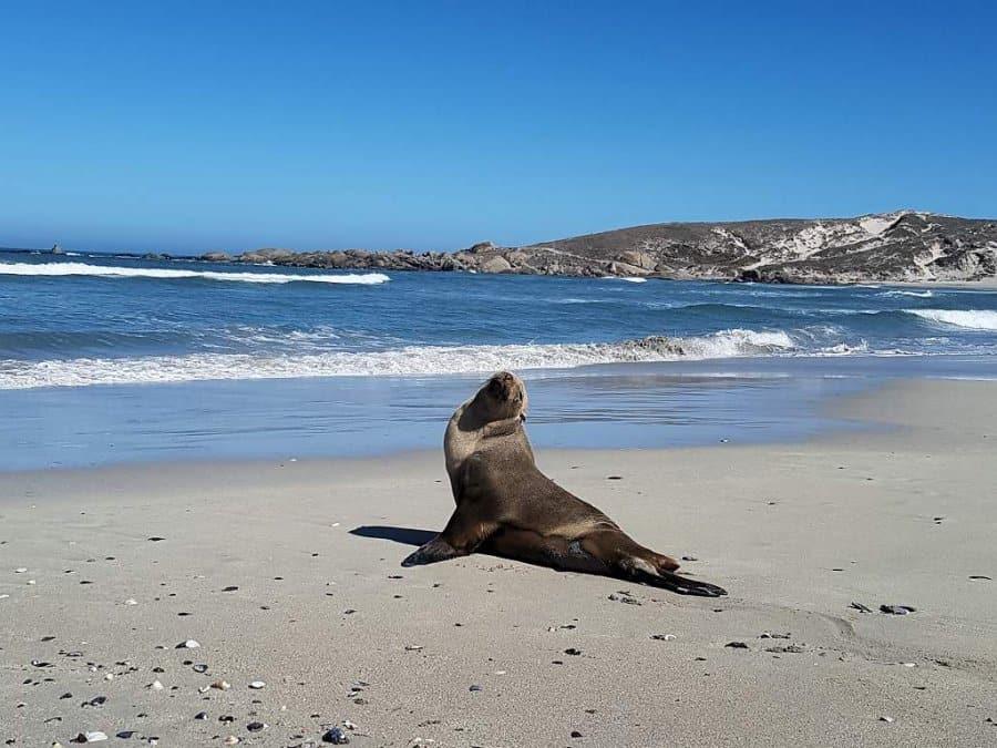 Cape West Coast South Africa 002