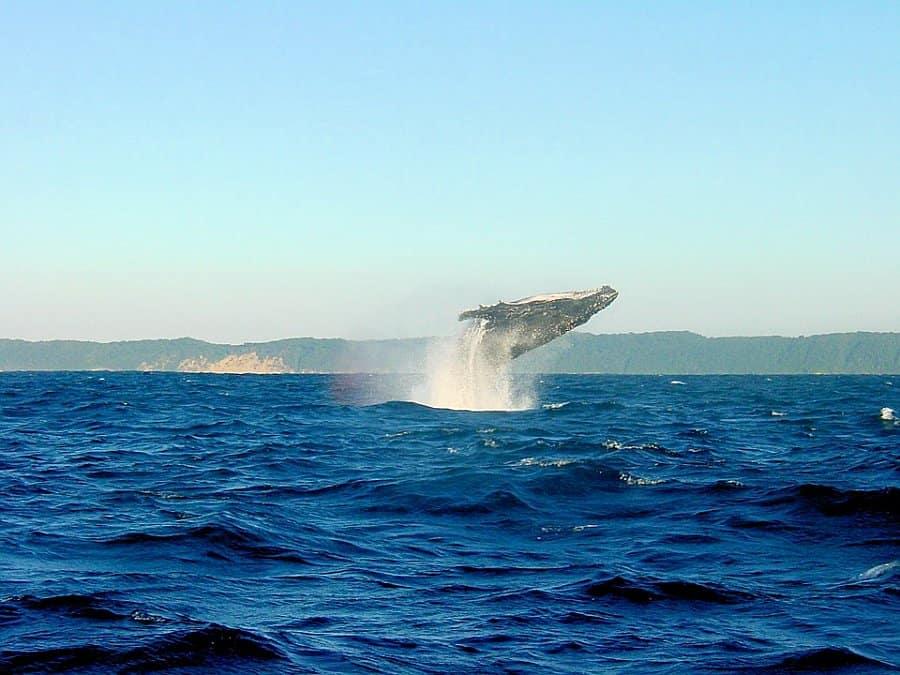 Cape West Coast South Africa 009